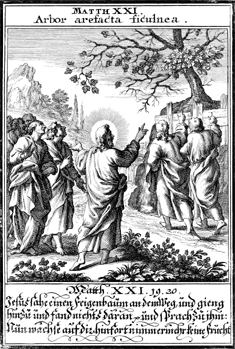 Parable of the Fig Tree